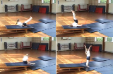 Pike counterbalance entry up inclineKey 3 Backwards rollGymnastics Drills Coaching